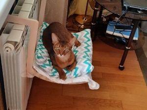 Хорошо быть котом. Ярмарка Мастеров - ручная работа, handmade.