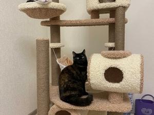 Безусловно кошки — это пушистые покорители людских сердец. Ярмарка Мастеров - ручная работа, handmade.