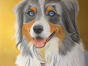 Рисуем пастелью собаку породы австралийская овчарка. Ярмарка Мастеров - ручная работа, handmade.