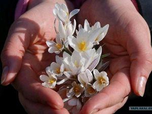 Счастливой вам Весны , Друзья !. Ярмарка Мастеров - ручная работа, handmade.