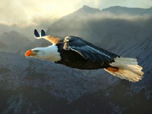 Парящий Орел — символ 2019 года. Ярмарка Мастеров - ручная работа, handmade.
