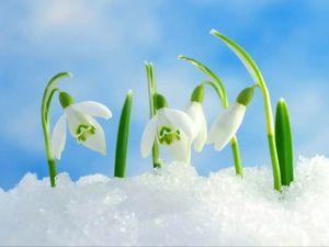 Весна близко! Цены тают. Ярмарка Мастеров - ручная работа, handmade.