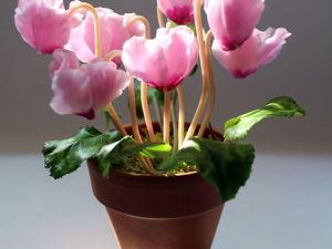 Видеоурок: лепка цикламена из полимерной глины. Ярмарка Мастеров - ручная работа, handmade.