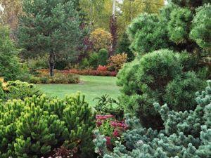 Первое октябрьское солнышко. Прогулка по саду после дождика. Ярмарка Мастеров - ручная работа, handmade.