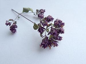 Сушим цветы и заливаем эпоксидной смолой: мята перечная. Ярмарка Мастеров - ручная работа, handmade.