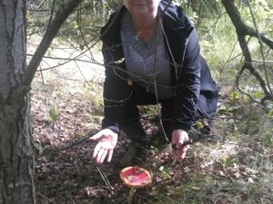 В Калининграде — грибы!. Ярмарка Мастеров - ручная работа, handmade.