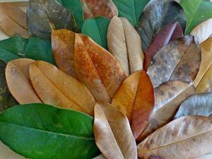 Эти волшебные листья магнолии. Ярмарка Мастеров - ручная работа, handmade.