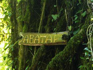 Древний дуб Аватар. Ярмарка Мастеров - ручная работа, handmade.