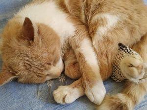 Аукцион  «Кошачий Ангел»  в помощь бездомным животным!. Ярмарка Мастеров - ручная работа, handmade.