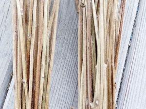 Стволы рудбекии. Ярмарка Мастеров - ручная работа, handmade.