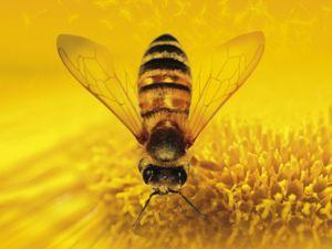 Видео о настройке  «Пчелиные фракталы». Ярмарка Мастеров - ручная работа, handmade.