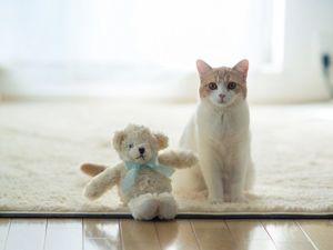 Ханна, Дейзи и Бен. Коты и их фотограф. Ярмарка Мастеров - ручная работа, handmade.