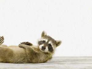 Шерон Монтроуз и её милые животные). Ярмарка Мастеров - ручная работа, handmade.