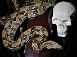 Фотосессия со змеей. Часть 2- шкатулка Гробик. Ярмарка Мастеров - ручная работа, handmade.