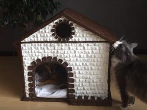 Мастерим домик для кошки и собаки из коробки. Ярмарка Мастеров - ручная работа, handmade.