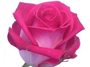 101-вый способ свалять розу. Ярмарка Мастеров - ручная работа, handmade.