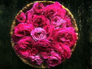 Свежайший гидролат Дамасской розы снова в наличии !!!. Ярмарка Мастеров - ручная работа, handmade.