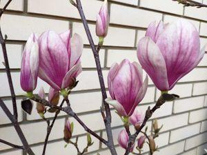 Моментальная весна. Прогулка по саду. Ярмарка Мастеров - ручная работа, handmade.