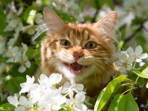 Минутки отдыха  «Котики и весна». Ярмарка Мастеров - ручная работа, handmade.