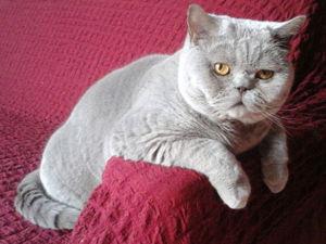 Без кота и жизнь не та!. Ярмарка Мастеров - ручная работа, handmade.