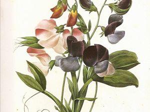 Жанры ботанического искусства. Часть 1. Ярмарка Мастеров - ручная работа, handmade.