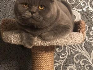 Безусловно кошки — это маленькие покровители больших людей. Ярмарка Мастеров - ручная работа, handmade.
