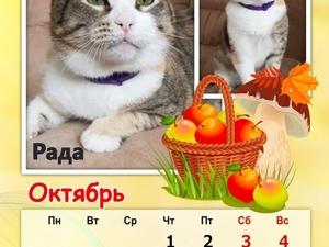 Кошко-собачий календарь 2020 Октябрь. Ярмарка Мастеров - ручная работа, handmade.