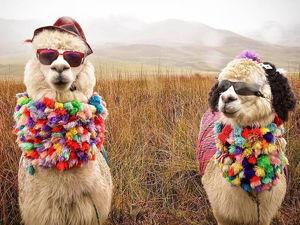 Лама или альпака? 15 интересных фактов и идей для творчества. Ярмарка Мастеров - ручная работа, handmade.