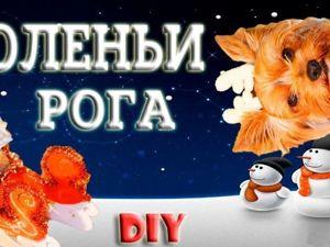 Новогодний костюм для собаки. Видеоурок по вязанию оленьих рогов. Ярмарка Мастеров - ручная работа, handmade.