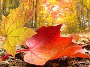 Стартует Ярмарка  «Времена года — Осень». Ярмарка Мастеров - ручная работа, handmade.