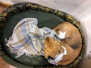 Шьем для собаки лежанку из поролона и холлофайбера. Ярмарка Мастеров - ручная работа, handmade.