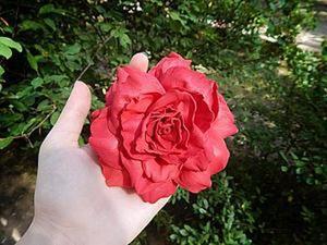 Реалистичная роза из фоамирана своими руками. Ярмарка Мастеров - ручная работа, handmade.