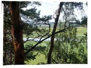 Ведьмины прогулки: тихий лес. Ярмарка Мастеров - ручная работа, handmade.