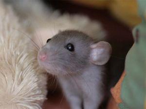 Дружелюбный, надежный и нейтральный серый: вдохновляемся «мышиным» цветом. Ярмарка Мастеров - ручная работа, handmade.