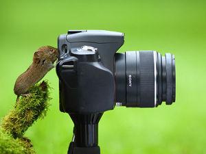 Профессия: фотограф. 20 кадров, на которых животные недвусмысленно (и очень мило) выражают свои профессиональные наклонности + СЕЛФИ-БОНУС. Ярмарка Мастеров - ручная работа, handmade.