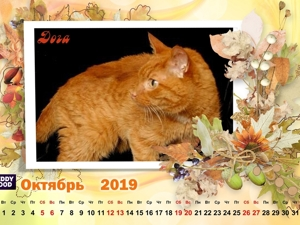 Кошачий календарь Октябрь 19г. Ярмарка Мастеров - ручная работа, handmade.