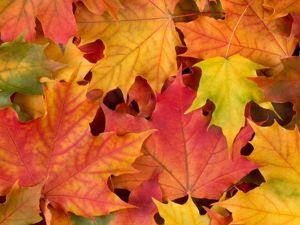 Осенний Ценопад!!! 25% на всё!!!. Ярмарка Мастеров - ручная работа, handmade.