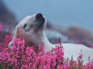 Ми ми мишные белые медведи. Ярмарка Мастеров - ручная работа, handmade.