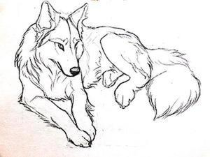 Рисуем волка карандашом поэтапно. Ярмарка Мастеров - ручная работа, handmade.