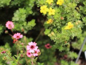 Яркое цветение Ботанического сада Мюнхена. Ярмарка Мастеров - ручная работа, handmade.