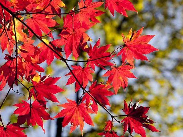 Ярмарка  «Времена года -Осень» . День второй | Ярмарка Мастеров - ручная работа, handmade