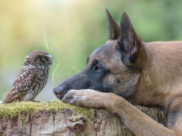 Невероятно трогательные фотографии Тани Брандт о дружбе совы и собаки | Ярмарка Мастеров - ручная работа, handmade