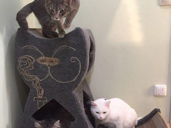 Как чистить (видео) гофрокартоную когтеточку  и когда делаешь дом для своих котов ... и не доделываешь его)   Ярмарка Мастеров - ручная работа, handmade