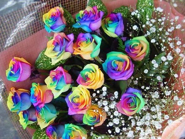 Интересные факты о цветах — розах | Ярмарка Мастеров - ручная работа, handmade
