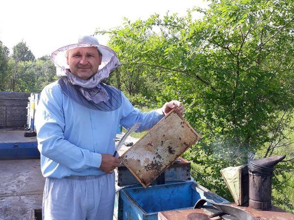 Новый сезон. Скоро свежий мед! | Ярмарка Мастеров - ручная работа, handmade