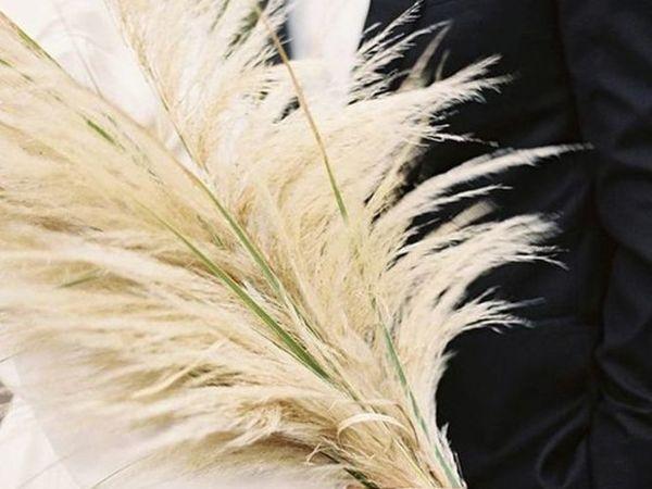 Пампасная трава — открытие декораторов   Ярмарка Мастеров - ручная работа, handmade