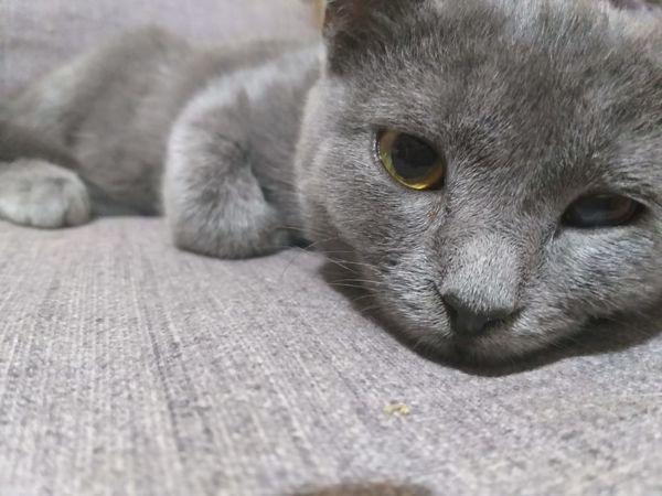 Взяла вторую кошку из приюта, она больна. Сбор закрыт! Спасибо всем!   Ярмарка Мастеров - ручная работа, handmade