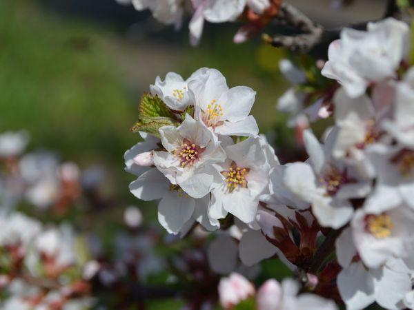 Наконец весна!   Ярмарка Мастеров - ручная работа, handmade