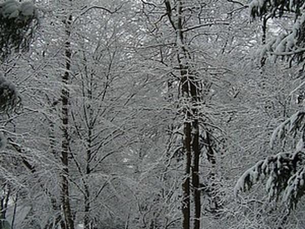 Наступление зимы... | Ярмарка Мастеров - ручная работа, handmade