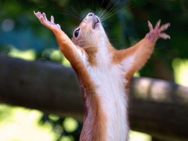 Урааа!  «Рассветная дымка»  на главной!!! | Ярмарка Мастеров - ручная работа, handmade